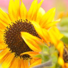 Floral Photography Of Emi Nakajima